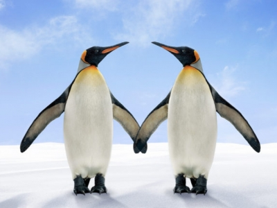 Two penguins looking at each other and holding flippers
